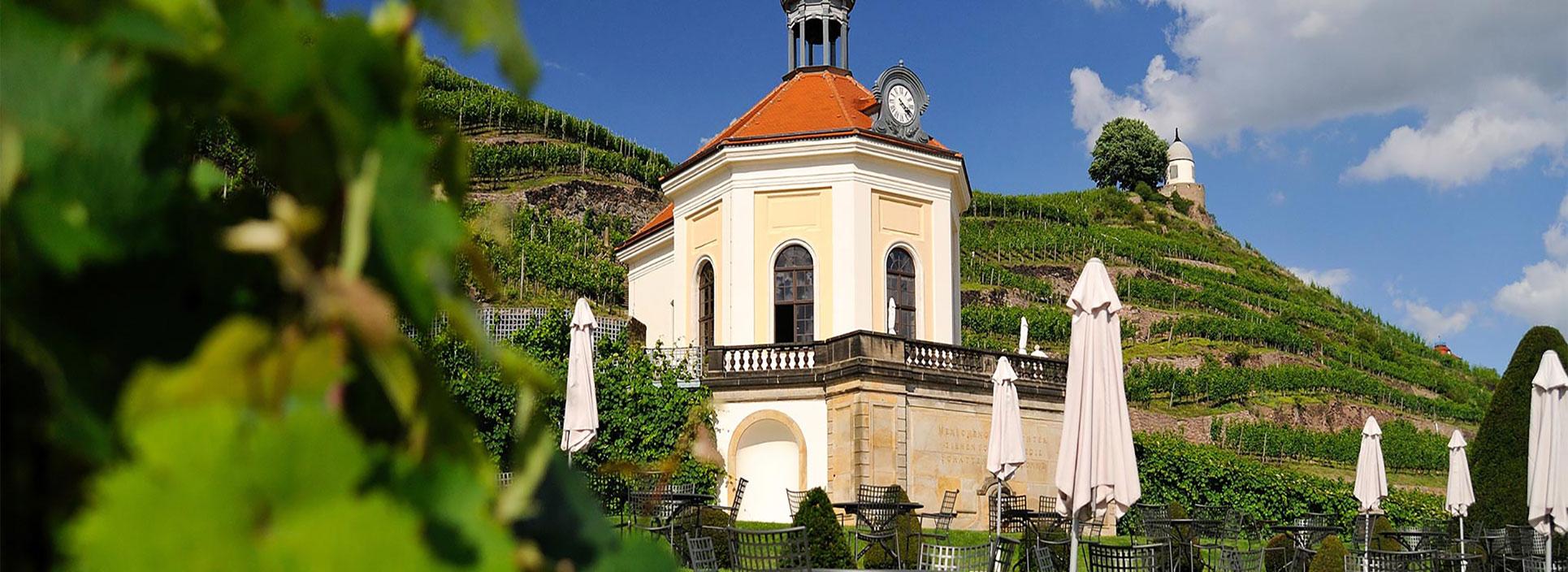 Weinberg in Weinböhla