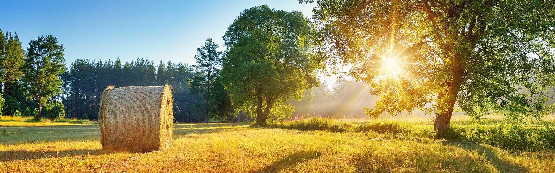 Feld in der Sonne mit Heuballen