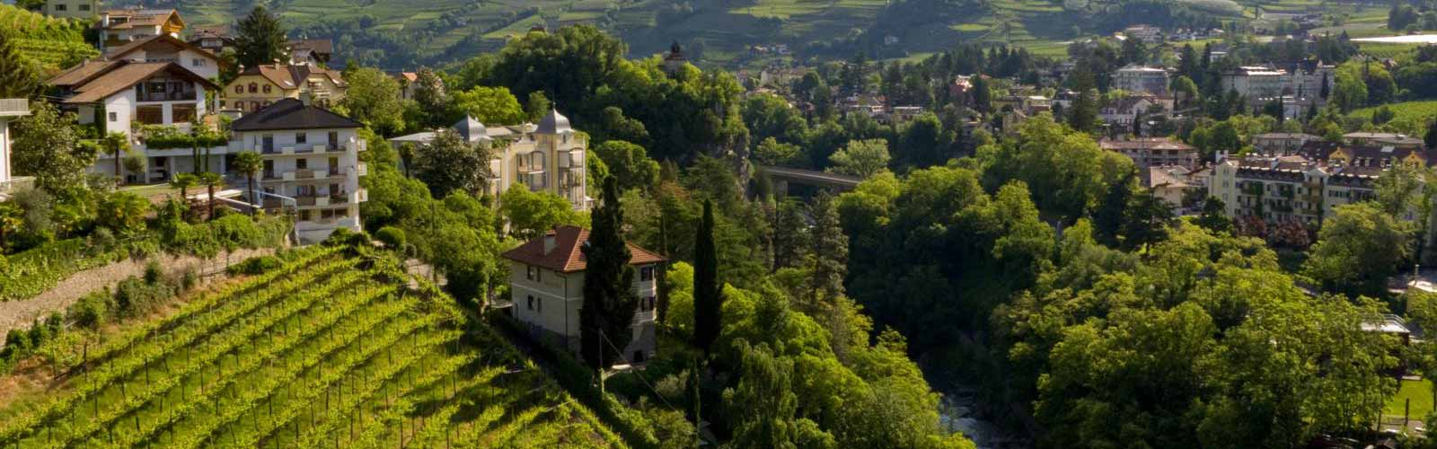 Weinberge in Süd Tirol